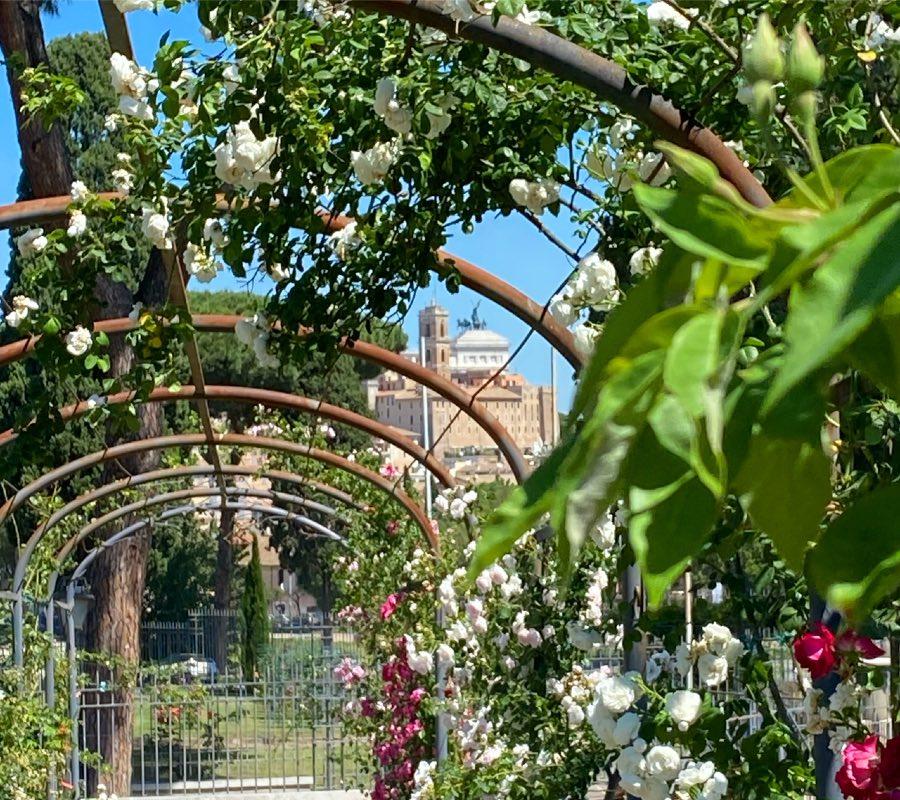 Ogród rózany